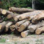 furt lemne busteni